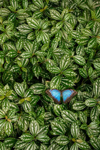 Colorful Tropical Butterfly In...