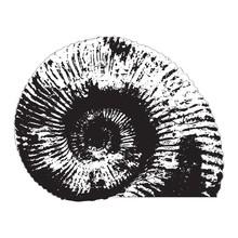 Ammonite Shell Silhouette. Vector Illustration.