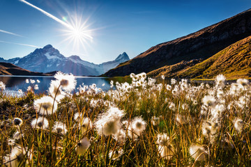 Wonderful morning scene of Bachalp lake / Bachalpsee with feather grass flowers. Stunning autunm scene of Swiss alps, Grindelwald, Bernese Oberland, Europe. Beauty of nature concept background.