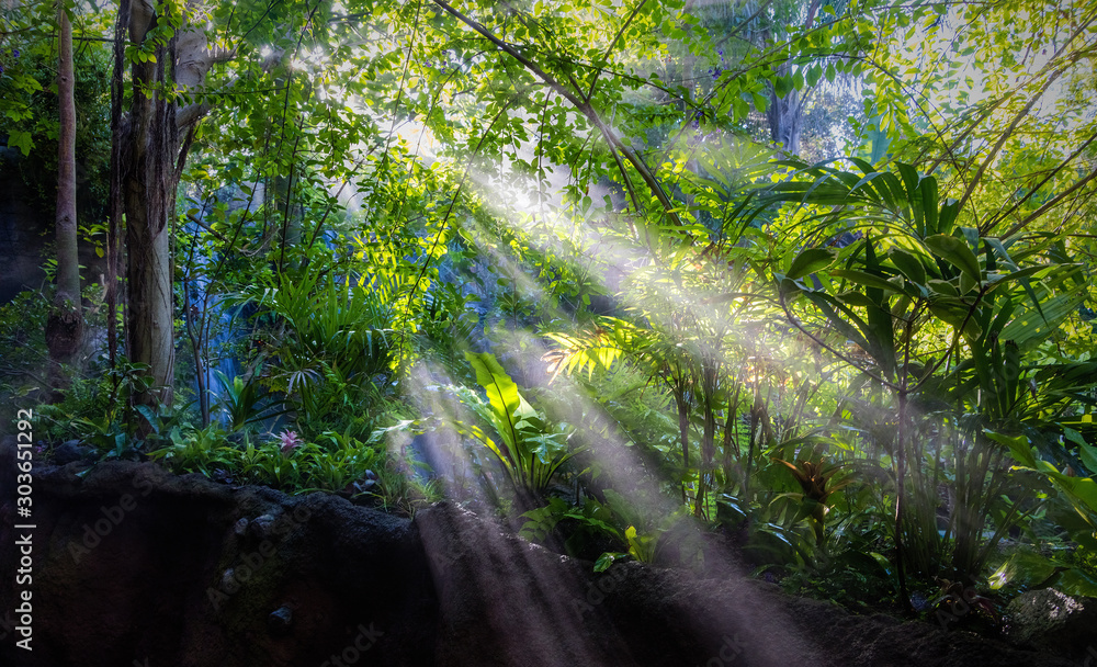 Fototapeta Las Tropikalny