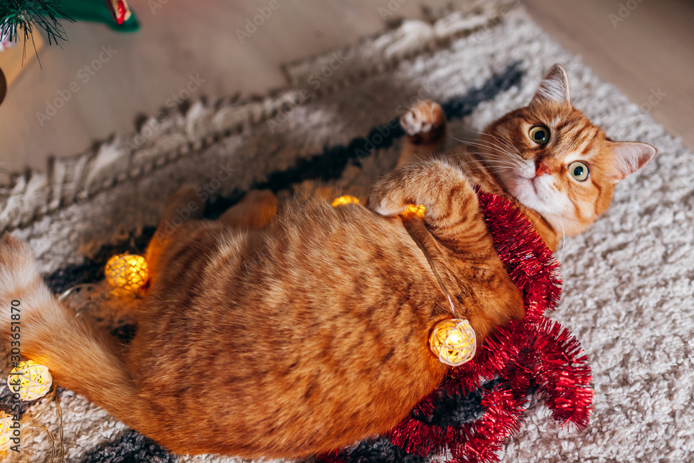 Ginger cat playing with garland under Christmas tree. Christmas and New year concept