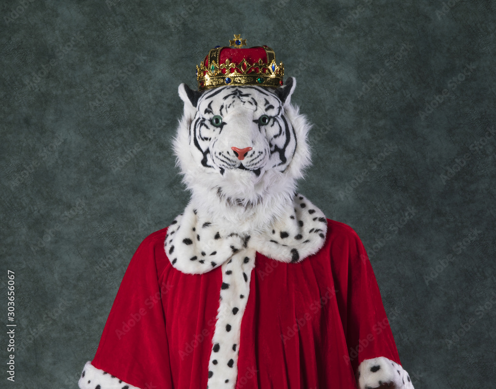 Fototapeta king tiger with crown, studio background