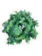 Leinwanddruck Bild - Deciduous tree crown top view planning