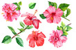canvas print picture Set Tropical flower hibiscus on an isolated background, watercolor botanical illustration, hand-drawn