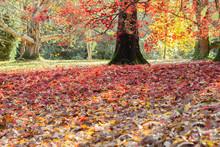 Beautiful British Autumn, Colo...