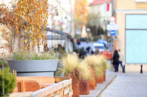 Donica ogromna z drzewkiem brzozy na rynku miasta, bilbord, reklama. - 303667851