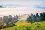 Foggy summer view of Carpathian mountains. Sunny morning scene of Borzhava mountain ridge, Transcarpathian, Ukraine, Europe. Beauty of nature concept background. Instagram toning. - 303668896