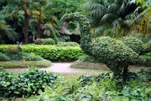 Ivy Dinosaurs In Parque Terra Nostra In Azores