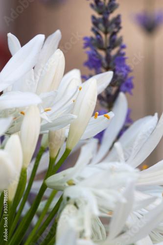 Fototapety, obrazy: Flores moradas y blancas