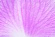 Texture pink petal macro