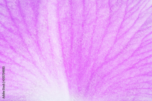Canvas Prints Macro photography Texture pink petal macro