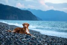 Dog On Vacation. Nova Scotia D...