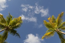 Low Angle Shot Of Two Palms Under The Sky With A Few Clouds