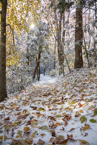 Yellow leaves on hiking trail through snow covered woods in Great Smoky Mountains National Park