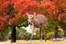 Beautiful Young Baby Fawn Deer...