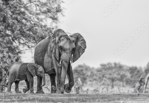 Photo elephant isolated on white background