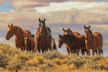 Wild Mustangs Pilot Butte Wyoming