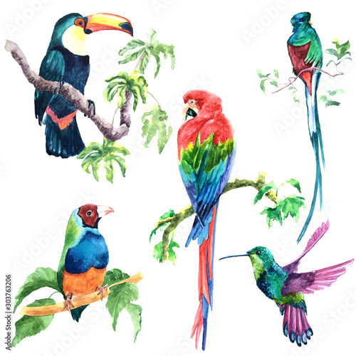 Fotomural Watercolor painted tropical colored bird species
