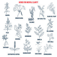 Best Herbs For Mental Clarity