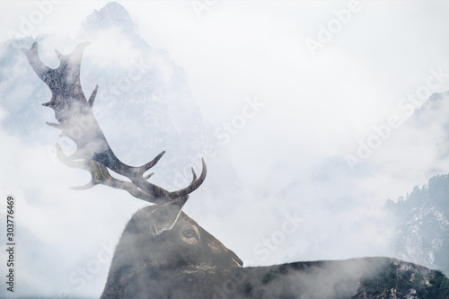 Double exposure of antler and forest - 303776469