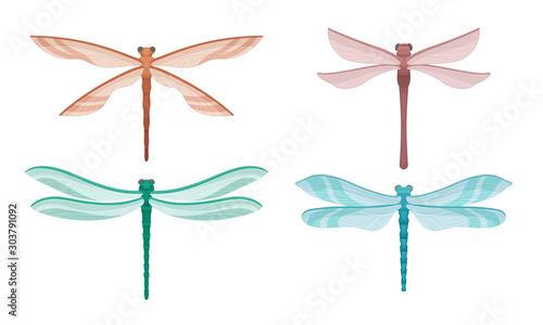 Valokuvatapetti Dragonflies Isolated On White Background Vector Set