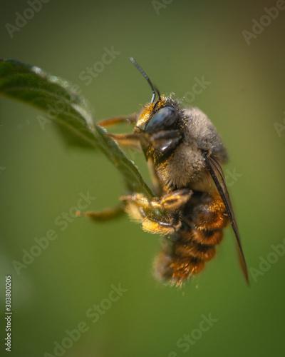 Autocollant pour porte Bee Bee zoom