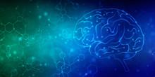 2d Illustration Human Health Brain