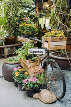 Old Vintage Bicycle With Plant...