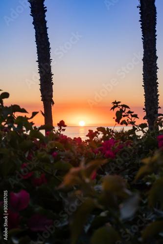 Tropical Flower Garden on the Beach at Sunset