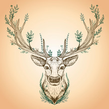 Hand Drawn Graphic Sketch Illustration Of A Forest Spirit As A Deer With Big Antlers And Leaves Growth On It