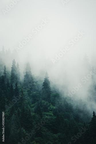 Obraz Misty mountain landscape - fototapety do salonu