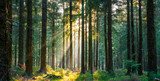 Fototapeta Las - Silent Forest in spring with beautiful bright sun rays