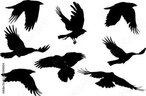 group of eight flying crow silhouettes on white