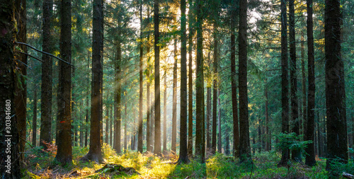 Silent Forest in spring with beautiful bright sun rays - 303841680