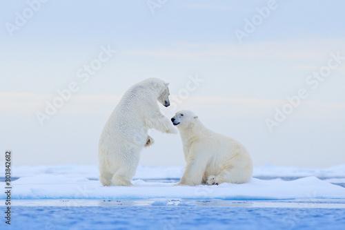 Photo Polar bear dancing on the ice
