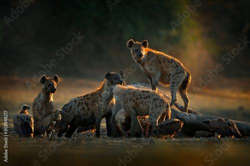 Africa wildlife Wallpaper Mural