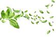 Leinwanddruck Bild - Fresh green basil leaves flying on white background