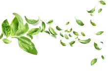 Fresh Green Basil Leaves Flyin...