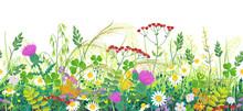 Summer Meadow Plants Seamless ...