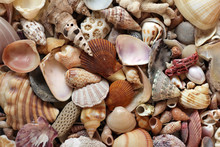 Sea Shells And Coral Close Up