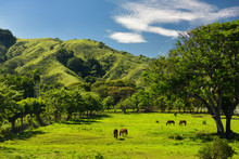 Horses Grazing On Ranch Land B...