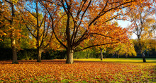 Autumn Leaves And Autumn Trees...