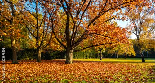 Obraz Herbst - fototapety do salonu