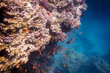 Underwater coral reef with plenty of tropical fish