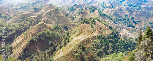 Recess Fitting Rice fields Sapa, Vietnam: terraces planted with rice in winter