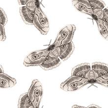Beautiful Moth Butterfly Seamless Pattern. Ready Print. White Background