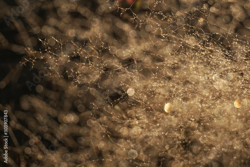 Morning dew on dry grass at the natural morning sunlight. Autumn grass background with blurred bokeh lights effect