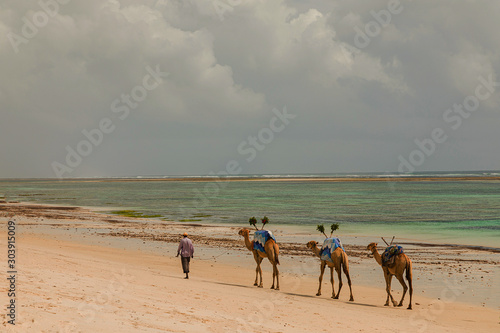 Diani, Mombasa, Kenya, Afrika oktober 13, 2019 An African camel driver leads a small caravan against the background of palm trees along the ocean Billede på lærred