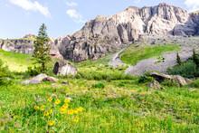 Green Alpine Rocky Meadow With...