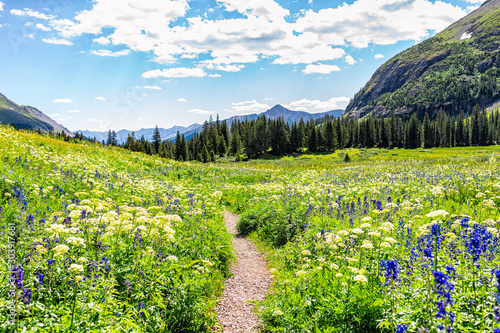 Open landscape view of green wildflowers meadow and footpath trail to Ice lake near Silverton, Colorado in August 2019 summer - 303917681